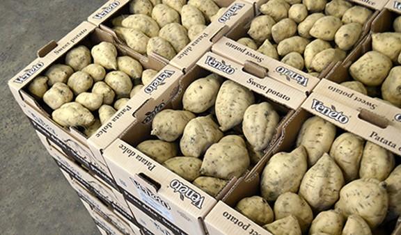 patate americane Anguillara Veneta